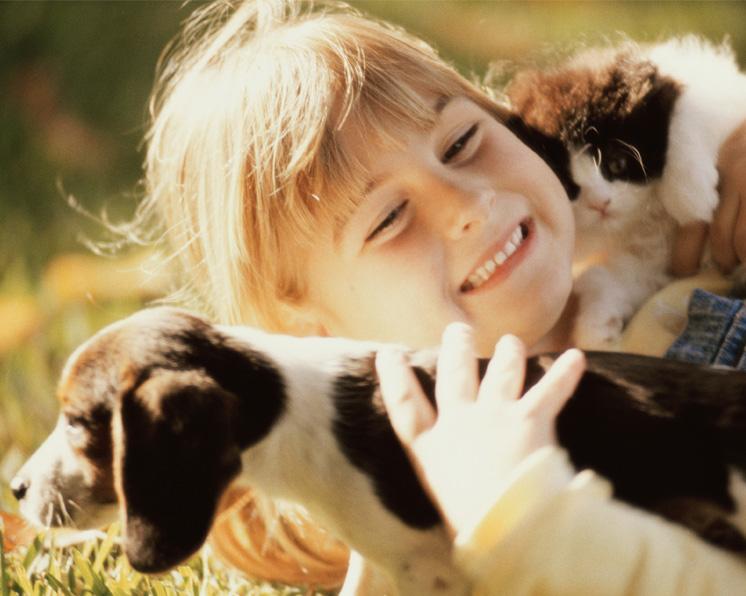 C mo sacar el olor de la orina de las mascotas - Como quitar el olor a tabaco en casa ...